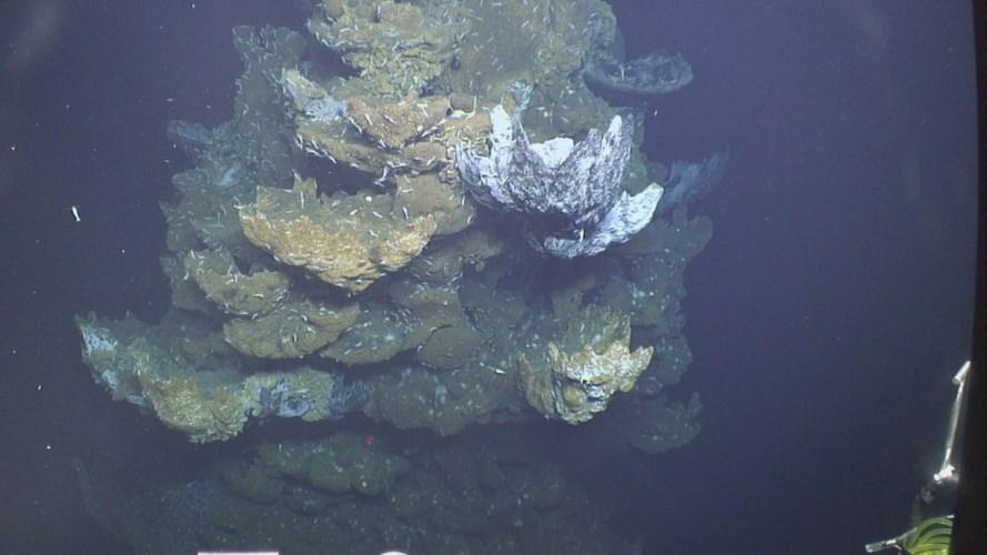 10 điều bí ẩn về đáy đại dương gây sốc nhất