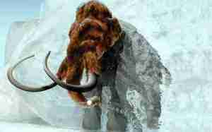 woolly_mammoth_1124494c