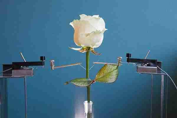 biyonik_bitki-cybor-cyborg_bitki-elektronik_bitki-power_plant