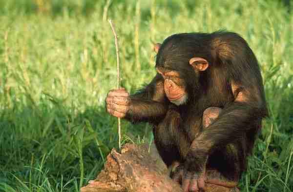 3-adımda-hangi-hayvanlar-daha-zeki