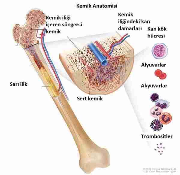 lösemi-diyabet-kök_hücre-alzheimer-demans