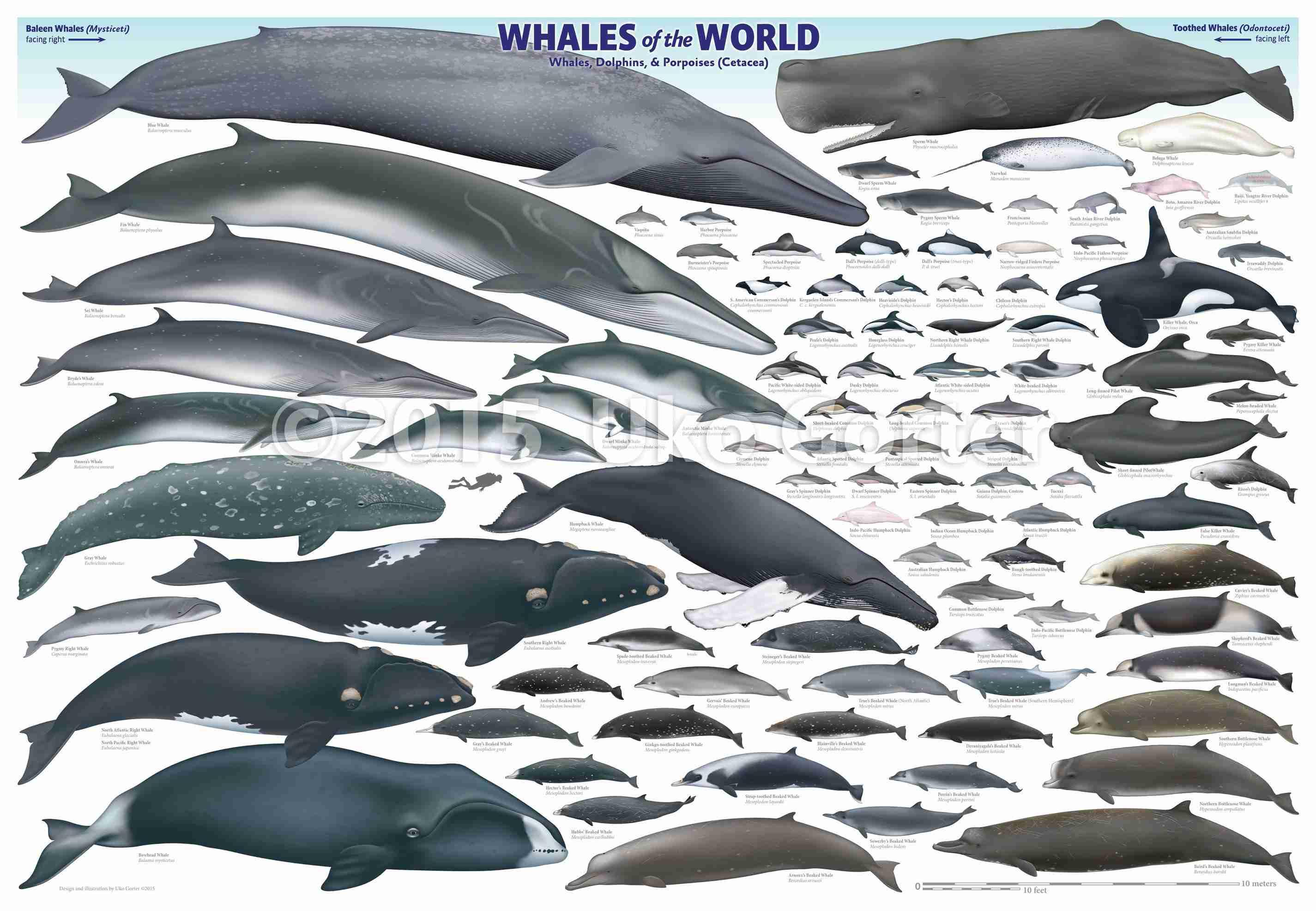 Balinalar neden bu kadar b y k kozan demircan for How many fish are in the world