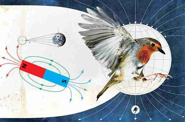 Manyetovizyon-göçmen-kuşlar-yolunu-nasıl-buluyor
