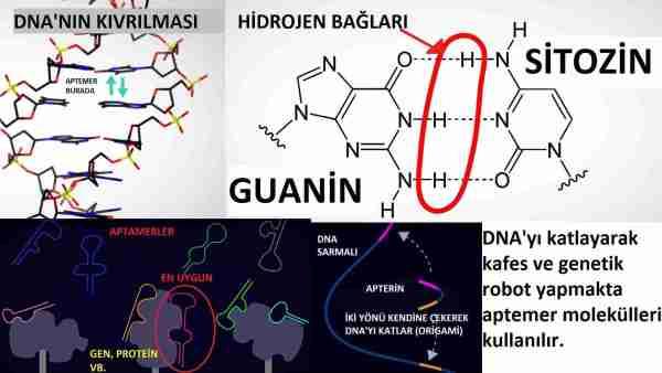 DNA-tabanlı-biyolojik-bilgisayar-ve-robotlar-geliyor