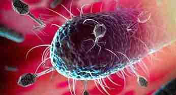 Dünyadaki Bütün Virüsleri Yok Edersek Ne Olur?