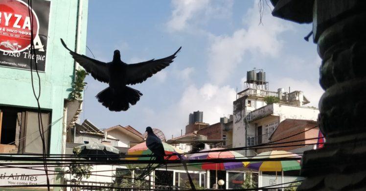 Langtang Trek Diary Kathmandu
