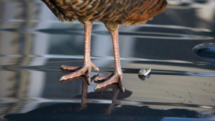 bird-poop-on-car-khurki.net