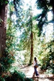A fair maiden walks through the Redwood Grove