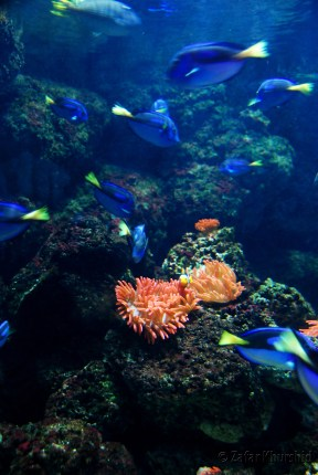 A colorful reef replica with the star's of Pixar's brilliant flic