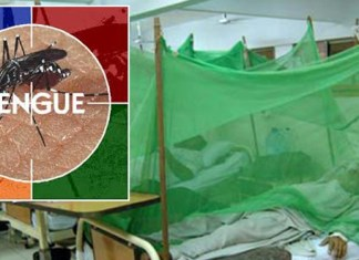 56 new dengue cases reported during 24 hours in Khyber Pakhtunkhwa