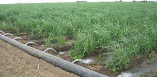 irrigation schemes in KP