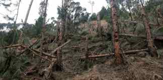 FIR registered against Indian pilots for bombing trees