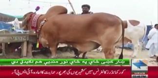 KhyberNews, EidulAzha2019, Karachi, Mandi2019