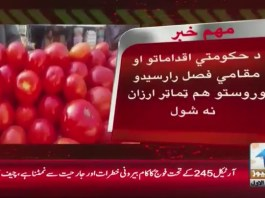 #KhyberNews #TomatoPrices #PTI