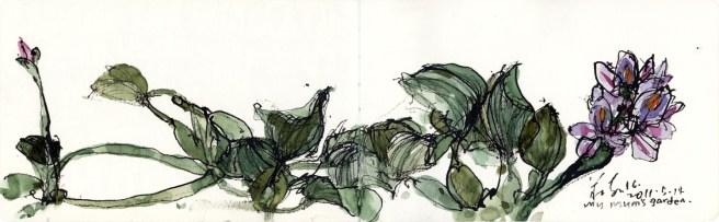 moleskine-01_b13-my-mums-garden-water-hyacinth