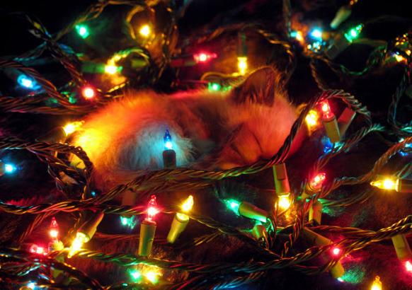 Kitten sleeping in Christmas tree