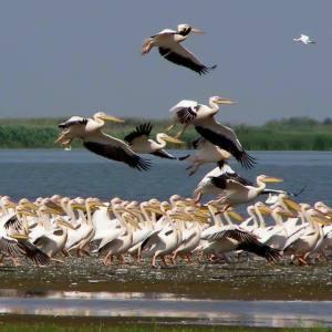 Danube Delta Wildlife