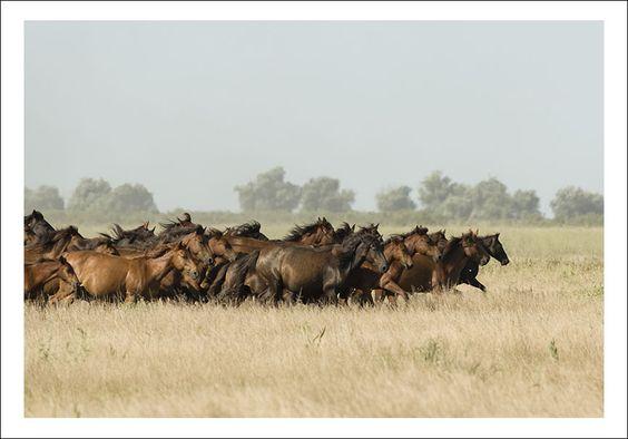 Danube Delta wildlife watching horses
