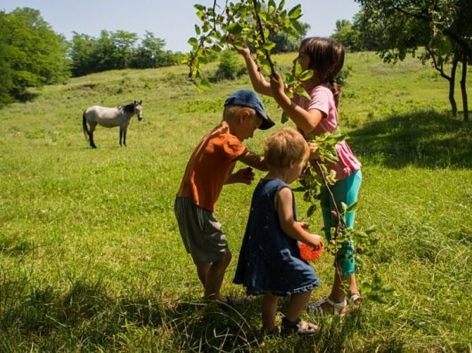best time to visit Danube Delta children