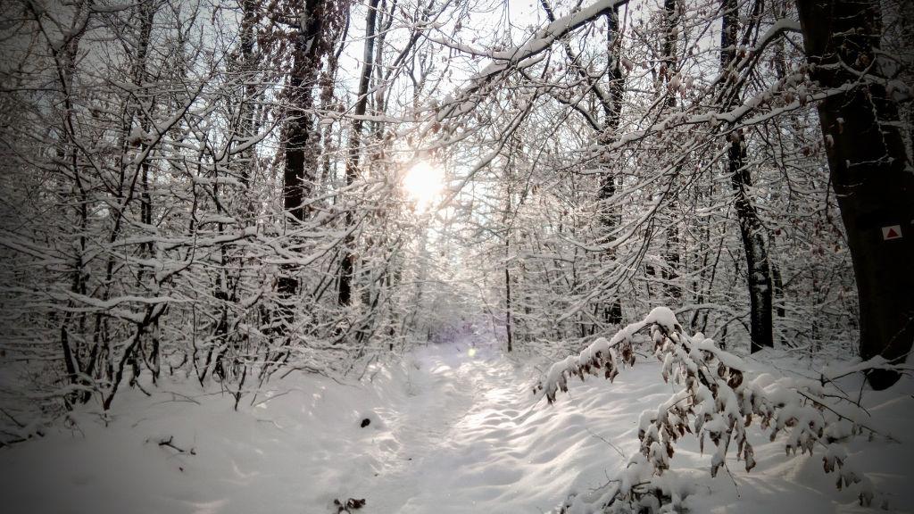 #035 Nyúlcipőbolt Budai trail   2018.12.16.