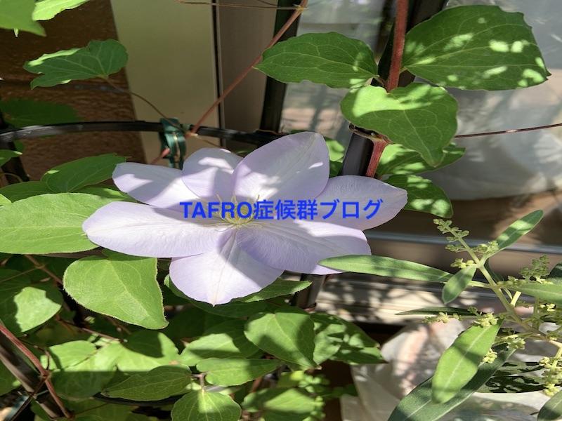 TAFRO症候群2020年5月