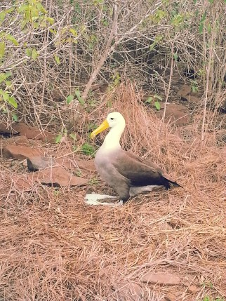 The Albatross, quite possibly the funniest animal we saw on the islands.