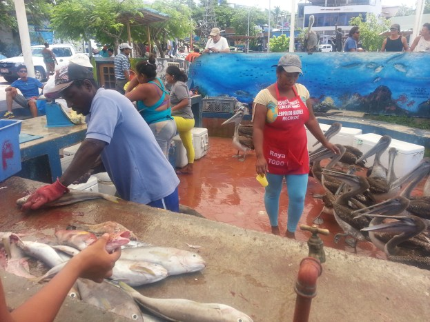 Fish sellers, they'll fillet the fish and guess where the guts go ...