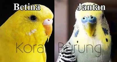 Cara Mudah Membedakan Burung Parkit Jantan Dan Betina Di Cute766