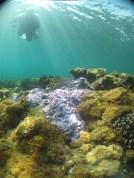 Passage Rocks, Keppel Bay