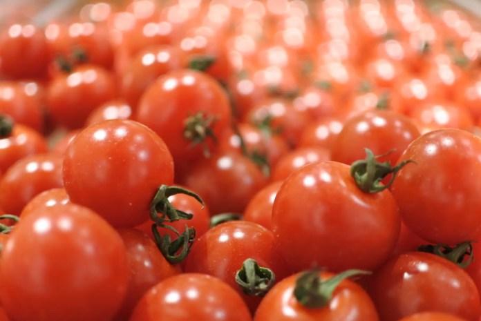tomato_sukui5