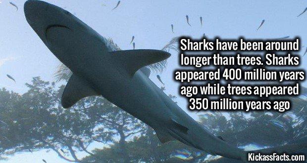 1273 Sharks vs Trees