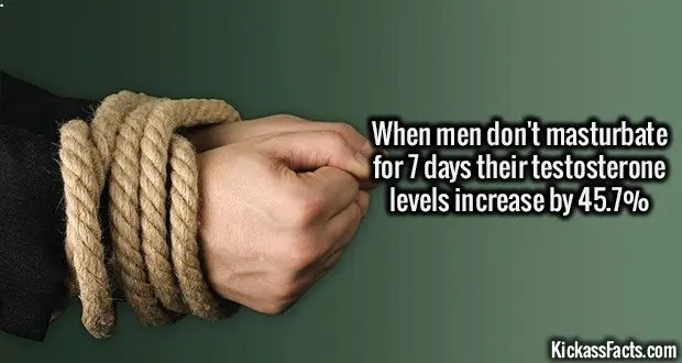 1399 Testosterone