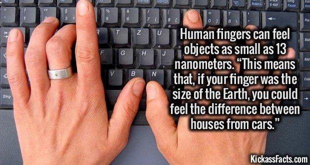 1742 Human fingers