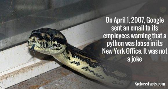 645Phyton NYC Google