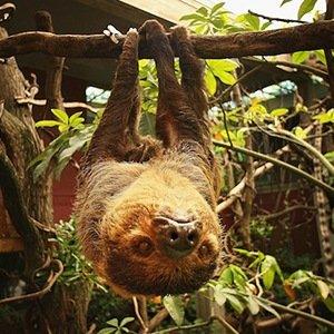74217314PM008_New_Rainfores-Random Facts List