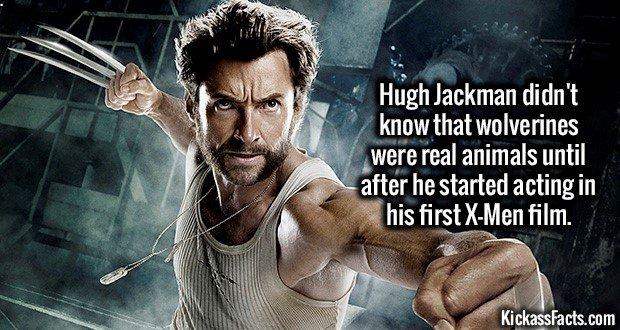 1784 Hugh Jackman Wolverine