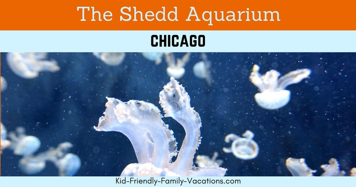 shedd aquarium chicago one