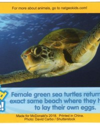 2018-april-weird-but-true-national-geographic-mcdonalds-happy-meal-toys-cards-green-sea-turtle-front.jpg