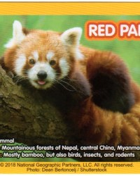 2018-april-weird-but-true-national-geographic-mcdonalds-happy-meal-toys-cards-red-panda-back.jpg