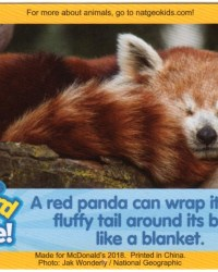 2018-april-weird-but-true-national-geographic-mcdonalds-happy-meal-toys-cards-red-panda-front.jpg