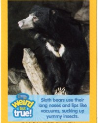 2018-april-weird-but-true-national-geographic-mcdonalds-happy-meal-toys-cards-sloth-bear-front.jpg