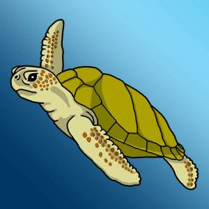 green_sea_turtle_rgb