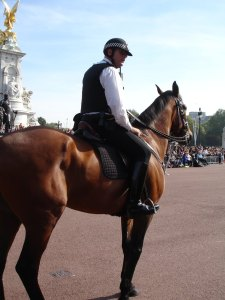 Another police horse!