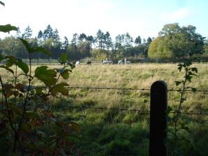 Lamas at Winkworth Arboretum
