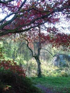 The boathouse at Winkworth Arboretum