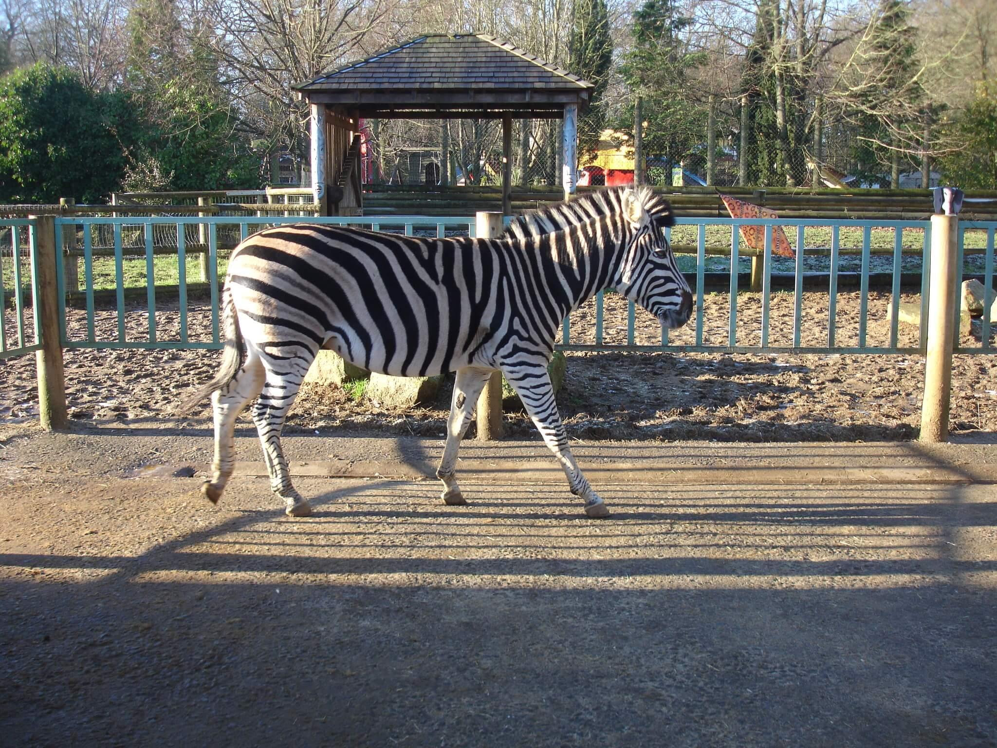 zebra paradise Meet the zebras at paradise wildlife park zebras are very adaptable grazers &  eat shrubs, herbs, twigs, leaves & bark book you zebra experience today.