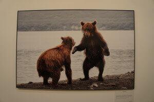 Bears at Undisturbed Russia