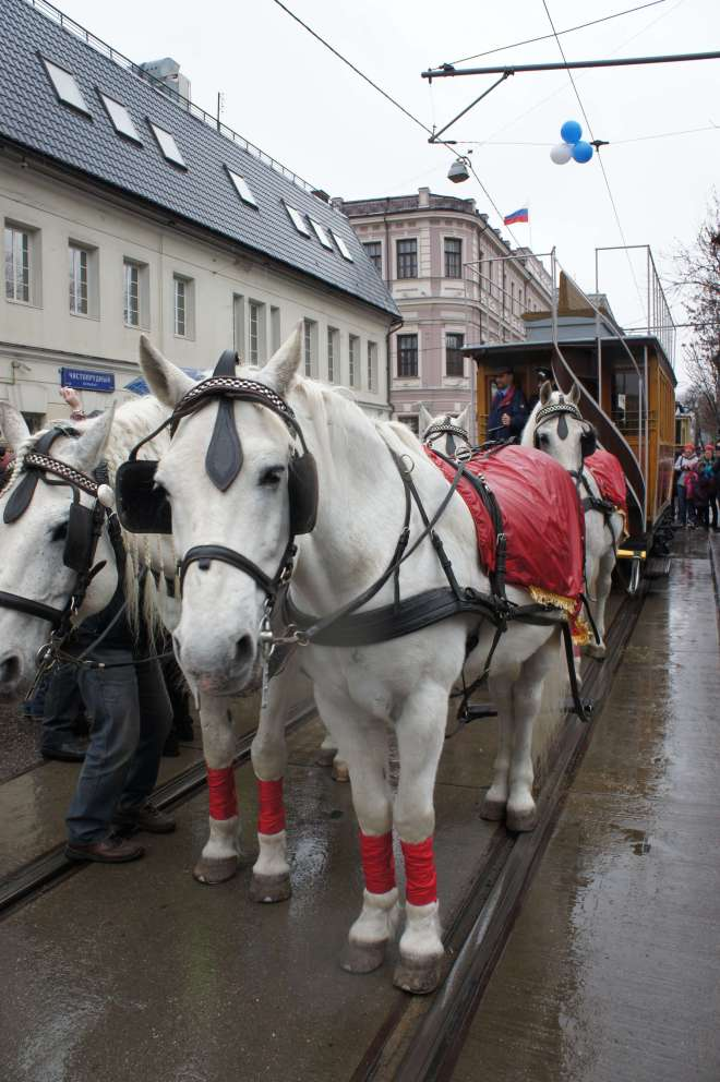 Horse-drawn tram at the tram parade, Moscow