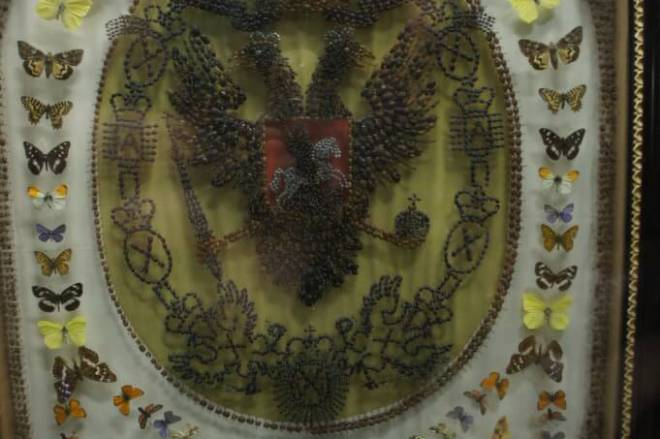 Russian Imperial eagle made out of bugs Moscow Zoological Museum