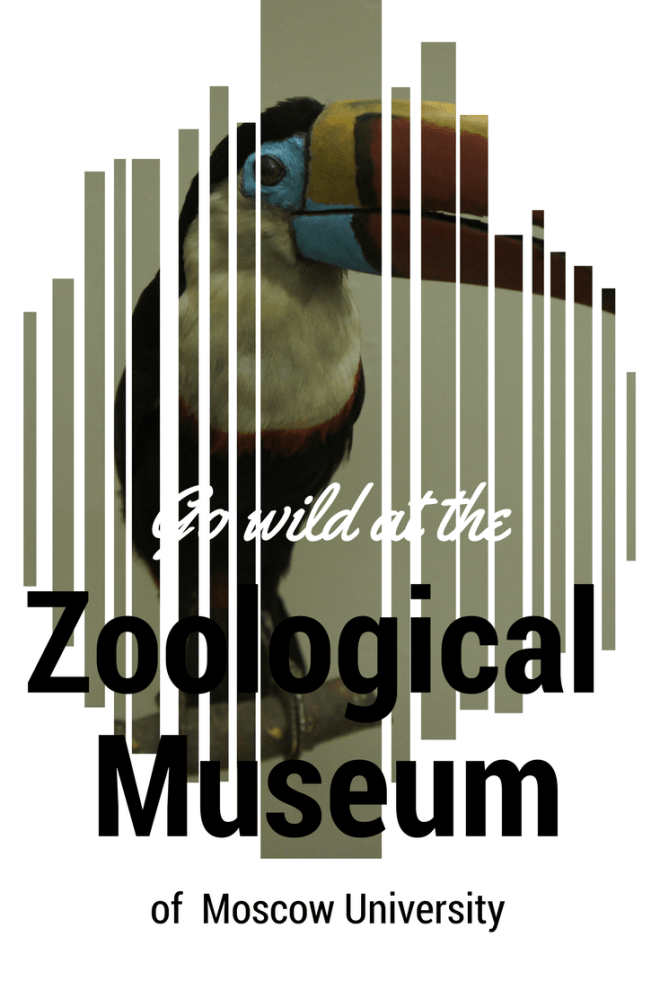 The Zoological Museum of Moscow University is full of stuffed animals and birds large and small and things pickled in glass jars